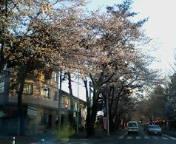 image/tsubasuke-2006-03-31T00:37:43-1.jpg